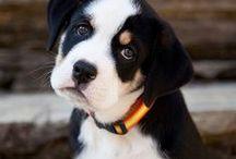 cachorros  e  pessoas / os  umanos  tem  um  amor  pelos  cachorros