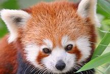 I ❤️ pandas