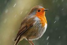 I ❤️ birds / De trop mignons petits oiseaux