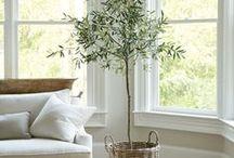green home / Rostliny v bytě , na balkonech a ...