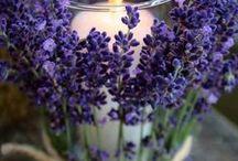 lavender / Ty jsi má levandulová, nádherná levandulová, famozně levandulová, u-hm, levandulová  ...