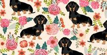 Dachshunds & Sausage Dogs!!!
