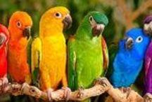 Fine Feathered Friends / Beautiful Birds! / by Kim Rafferty
