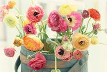 Fleurs printannières / #fleurs #plantes #jardin #printemps