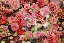ROSES / Roses forever
