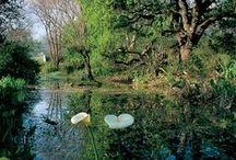 Gardens - Rustenberg and Schoongezicht / The stunning Rustenberg and Schoongezicht Gardens on the Rustenberg Estate