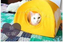 Crazy Cat Condos & Catertainment