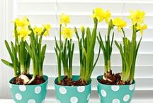 Spring / Easter Home Decor