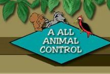 A All Animal Control / A All Animal Control wildlife management company, about us, and mission.