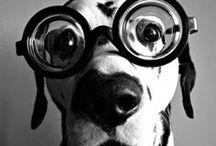 Friends Pets / Bichinhos que são TUDO DE BOM!!!