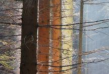 Art : Trees - Dessine-moi un arbre ....... / Les arbres que j'aime, sous toutes leurs formes, élancés, maigres, ronds, colorés ou nus, paisibles ou tourmentés, en couleur ou N&B ....Grands peintres ou non, simples ou sophistiqués  ...les arbres sont toujours de magnifiques œuvres d'art. / by MartineL
