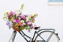 Flowers, pretty flowers