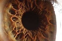 Close images of the Eye