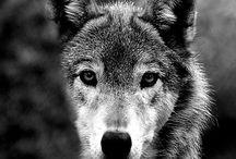 Animals / Animal photographs for art ideas