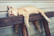 kitty cats / by debra giese