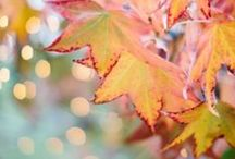 a u t u m n / Autumn is my favorite season! I love the colors, the smell, the temperature, the holidays… I love everything about it! Here are great images that represent autumn that will make you breath and relax!