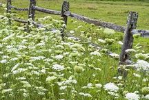 Plants and Gardens / Board plants and gardens that I like