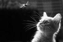 Cats ❤ / I love cats.
