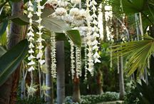 Absolutely Beautiful Wedding Ideas / Ideas for a fabulous wedding!