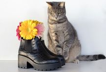 Kiki, the sweety cat / Fun and fashion moments with my sweet cat Kiki! #cat #cute #fashion