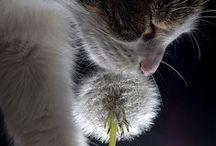 Animals - So cute!!