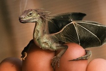 Fantasy : Creature : Dragon