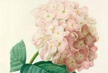 Botanical prints / Beautiful botanics to awaken any space