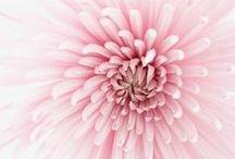 Kukkia ~ Flowers