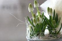 Pääsiäinen ~ Easter