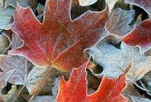 Syksy ~ Autumn