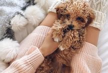 bundles of cute / cuteness everywhere