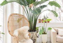 plants & flowers / stunning