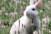Nature. / Everything from cute animals to galaxies far away... <3