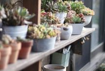 plants | 観葉植物や多肉植物 / 植物の画像。鉢植えの参考とか。