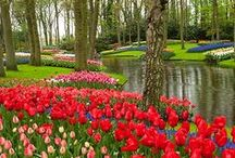 The Netherlands / by Connie Hosler