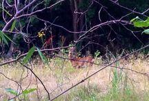 Planter Bambi - nok - ikke spiser / Del gerne dine gode erfaringer