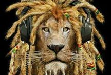 $noop Lion
