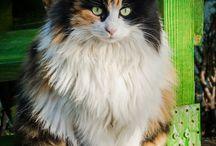 Котята / Что может быть прекрасней котиков? Мои и чужие