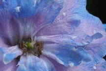 Флора / Мои фотоцветочки