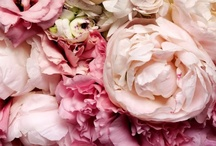 Flowers / by Abbe Braun