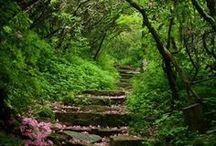 Luonto ja puutarha - nature and garden