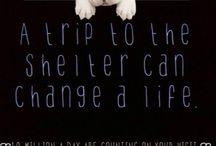 Inspirational pets