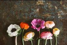 .flowerpower