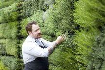Herbs fanatic