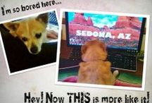 Pet Photo Contest - Win a Sedona Getaway! / Post your pets' most adorable, funny, hilarious, lovable photos on El Portal's Pinterest, Google+, Facebook or Twitter pages to enter to win a Sedona Getaway! Winner will win 2 nights at the fabulous El Portal Sedona Hotel, $100 food credit and $150 Jeep Adventure Tour credit! Start today!!!  #petcontest #ElPortalSedona / by El Portal Sedona Hotel