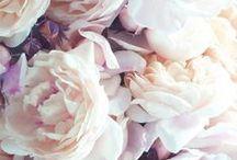 Flowers gallery / Fleurs - arbre - verdure - bouquet