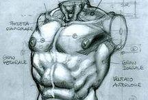 • Anatomy •