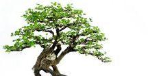 ['j']09【盆栽-Bonsai】 花もの・実もの・こけ玉 寄せ植え・鉢もの / 盆栽 寄せ植え 苔玉 植物// 葉もの・実もの・花もの・生け花flower arrangement (苔は別ボードへmoss→another board)