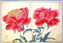('J')002-6//植物図譜    Old Japan Plants/botanical / plants  picture   /  World   ,  Japan
