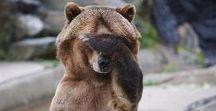 OC Bertaar / Bertaar Asala   qunari   Vashoth   mage   big lovely bear; likes giving hugs; friendly   work in progress